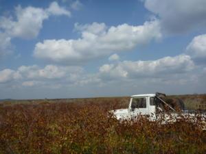 Breaking through the mopani schrubveld east of the Lebombo